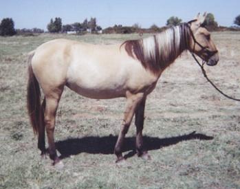 Sorraia Mustang Studbook The Sorraia Mustang Studbook Sms